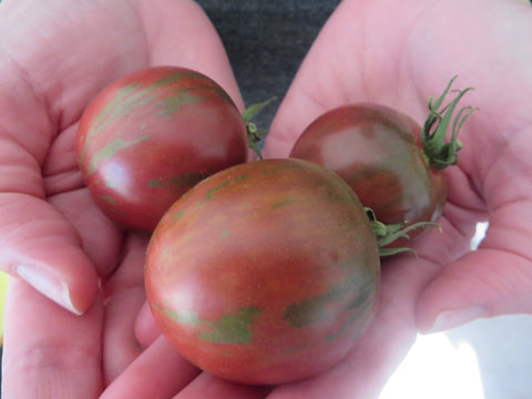 Some like it hot:  Heat-tolerant tomatoes