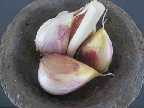 Brown Tempest Garlic (Organic)