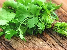 Cilantro: Hardy over-wintering