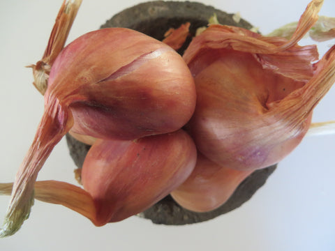 Dutch Red Shallots (Organic)