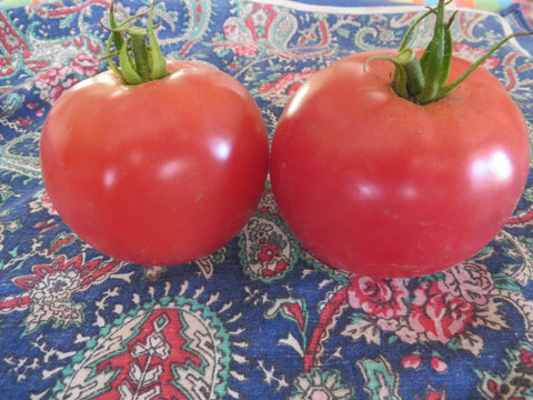 Eva Purple Ball Tomato (Organic)
