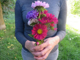 Giant Aster Mix