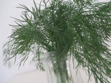 Greensleeves Dill (Organic)