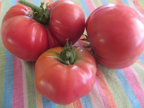 Mortgage Lifter Tomato (Organic)