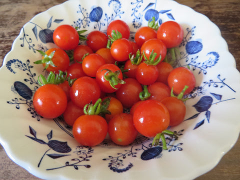 Peacevine Cherry Tomato