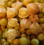 Pineapple Ground Cherry (Organic)