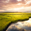 Wetland Ecosystems - Nature's Filter