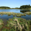 Ignition Pack - Wetland Ecosystems Unit