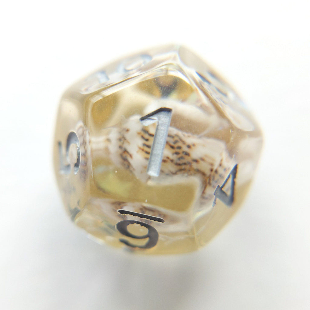 Gold Conch Dice Set, Real Seashells from the Ocean - CozyGamer