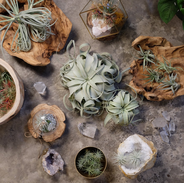 AirPlants + Glass Workshop