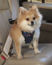 Deluxe Dog Seat Belt Harness - Oh My Dog Supply