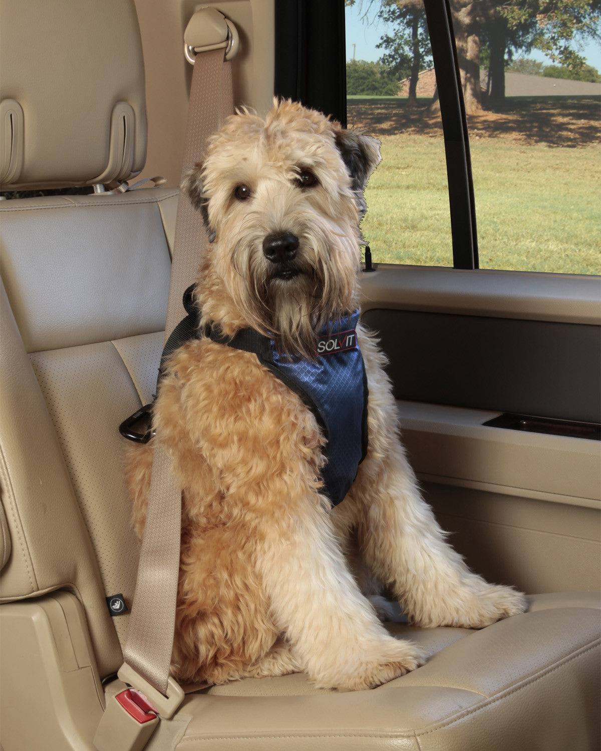 Deluxe Dog Seat Belt Harness Oh My Dog Supply