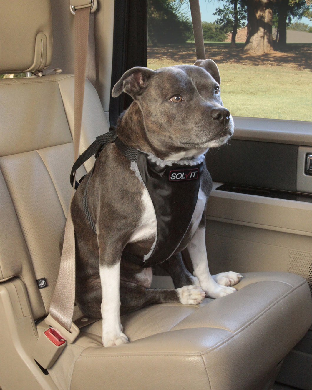Standard Seat Belt Harness - Oh My Dog Supply