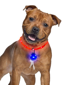The Nite Nite Safety Pack LED Collar and Tag Light