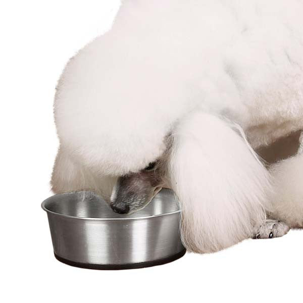 Stainless Steel Bowls with Rubber Bases - Oh My Dog Supply
