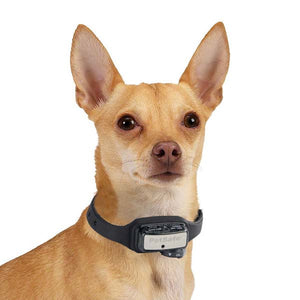 Deluxe Bark Control Collar for Little Dogs - Oh My Dog Supply