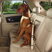 Clearance Classic Car Harness - Oh My Dog Supply