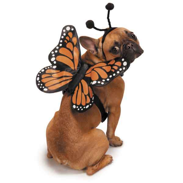 Butterfly Glow Wings Doggie Costume & Harness - Oh My Dog Supply