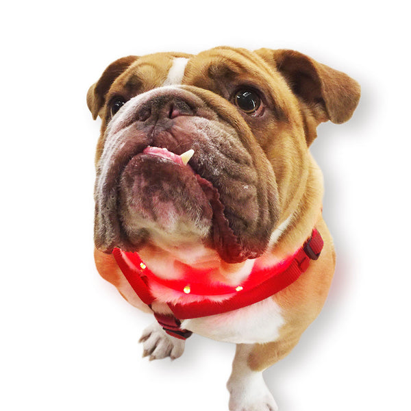 LED Safety Necklace Dog Collar