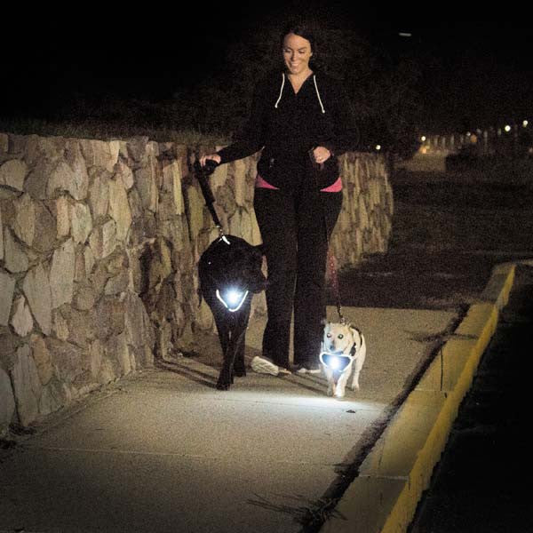 Sidewalk Illuminating LED Dog Harness