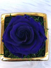 SOLO royal blue