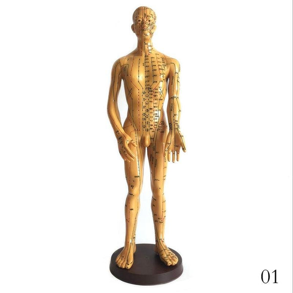 50cm/48cm  Chinese Medicine Teaching Human Body Model Of Acupuncture And Moxibustion Meridian