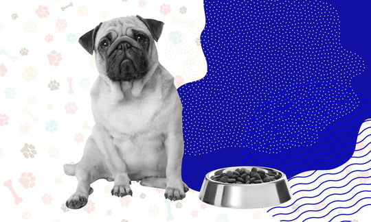 We Need To Talk... 3 Things You Should Consider When Buying Dog Food