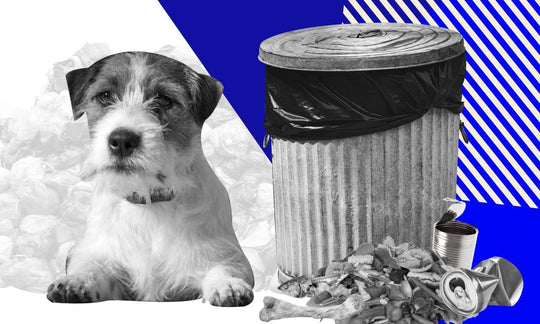 The State Of Dog Food Today - The Environment