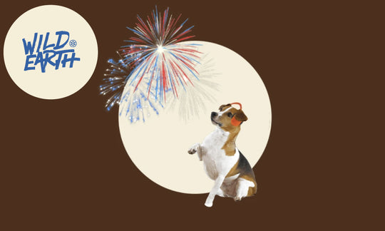 The Vet's Corner: 4th of July Fireworks, Thunderstorms, and Noise Phobias in Pets