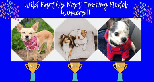 Lights, Camera, Action - Meet Wild Earth's Next Top Dog Model Contest Winners!