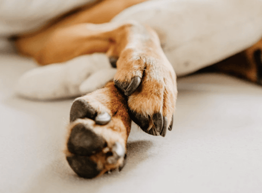 How to Trim Dog Nails With Confidence