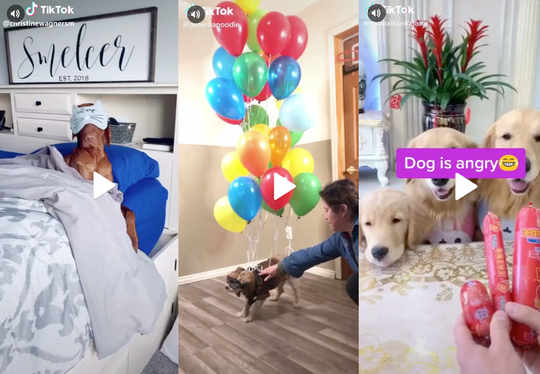 15 Super Cute Dog Videos from TikTok