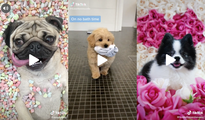 15 Amusing Videos of Dogs to Keep You Entertained