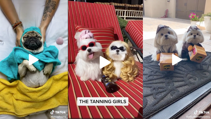 14 Dog Videos You Must See This Week