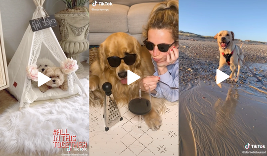 10 Amazing Dog Videos of The Week