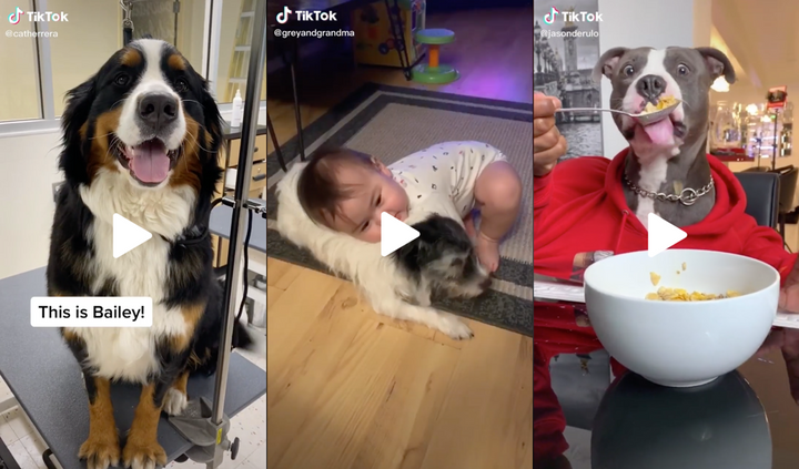 11 Best Dog Videos of the Week