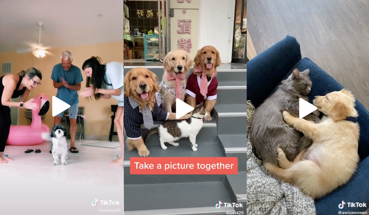 12 Cute Dog Videos of the Week