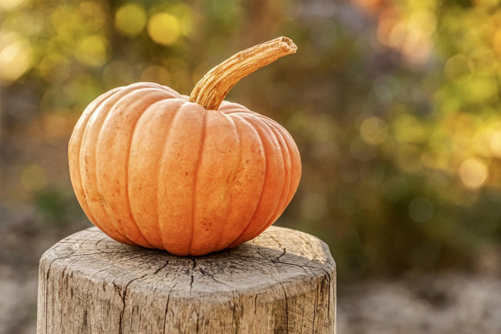 Can Dogs Eat Pumpkins? The Benefits of this Fall Favorite