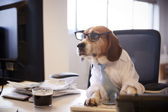 10 Amazing Posts of Dogs Working From Home