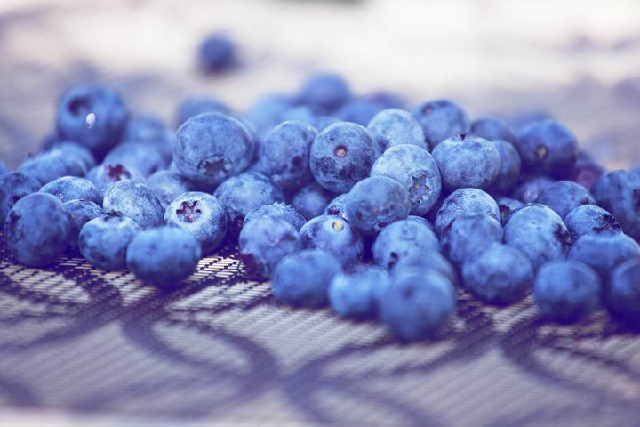 Are Blueberries as Good for Dogs as They are for You?
