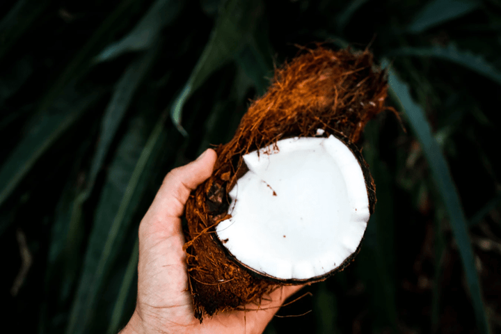 hand holding an open coconut