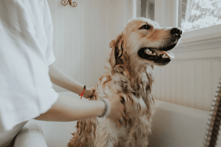 How Often Should You Wash Your Dog? A Stress-Free Guide to Dog Baths