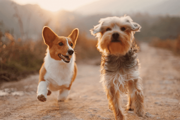 two dogs running down a path