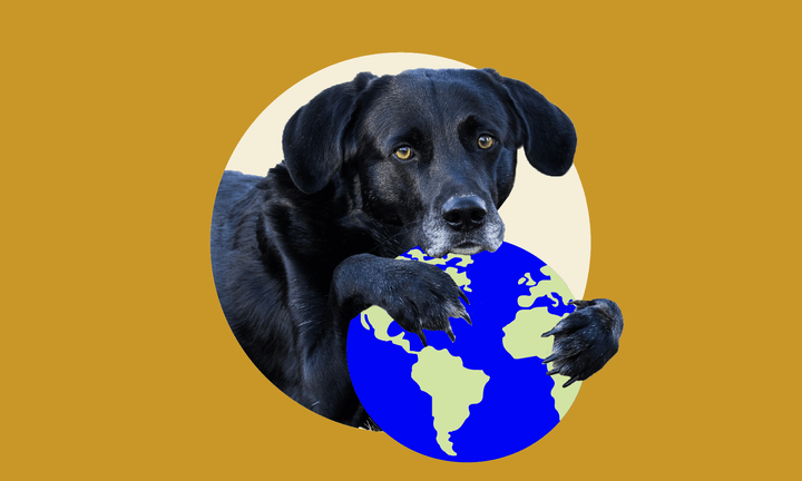 Wild Earth: Good for Your Dog - Good for the Planet