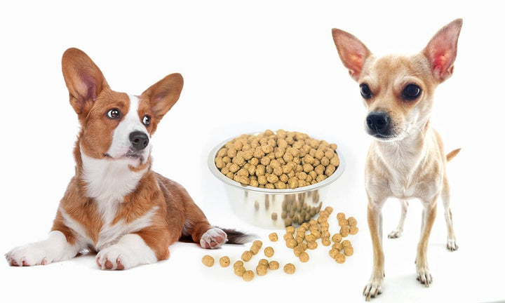 Yeast: The Protein Powering Your Pup