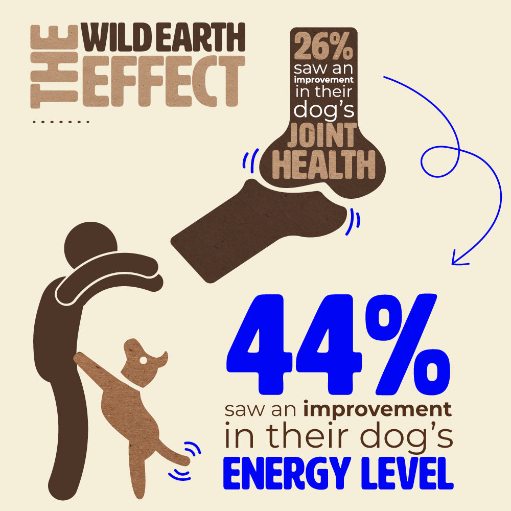 Wild Earth Dog Food Impact On Joint Health