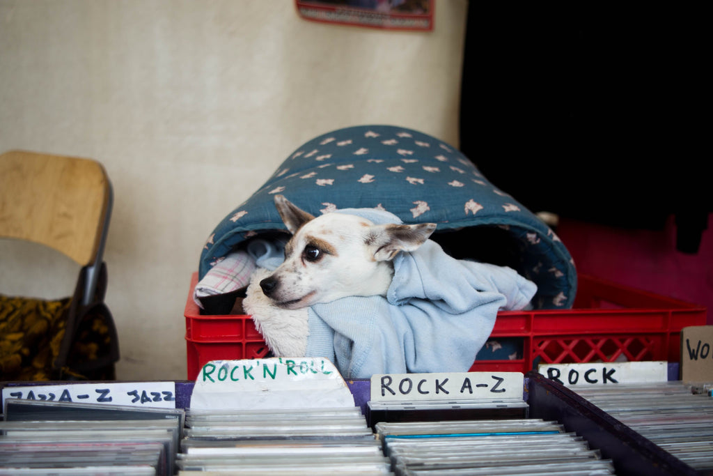 dog in record player crate