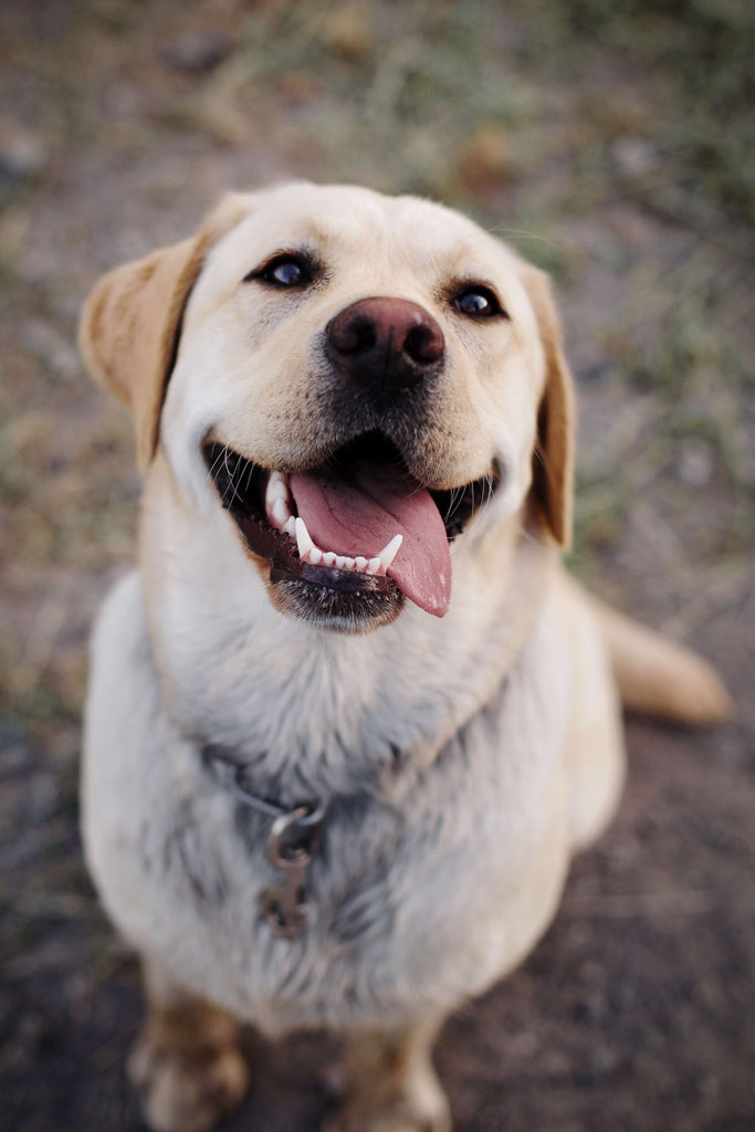 happy dog smiling
