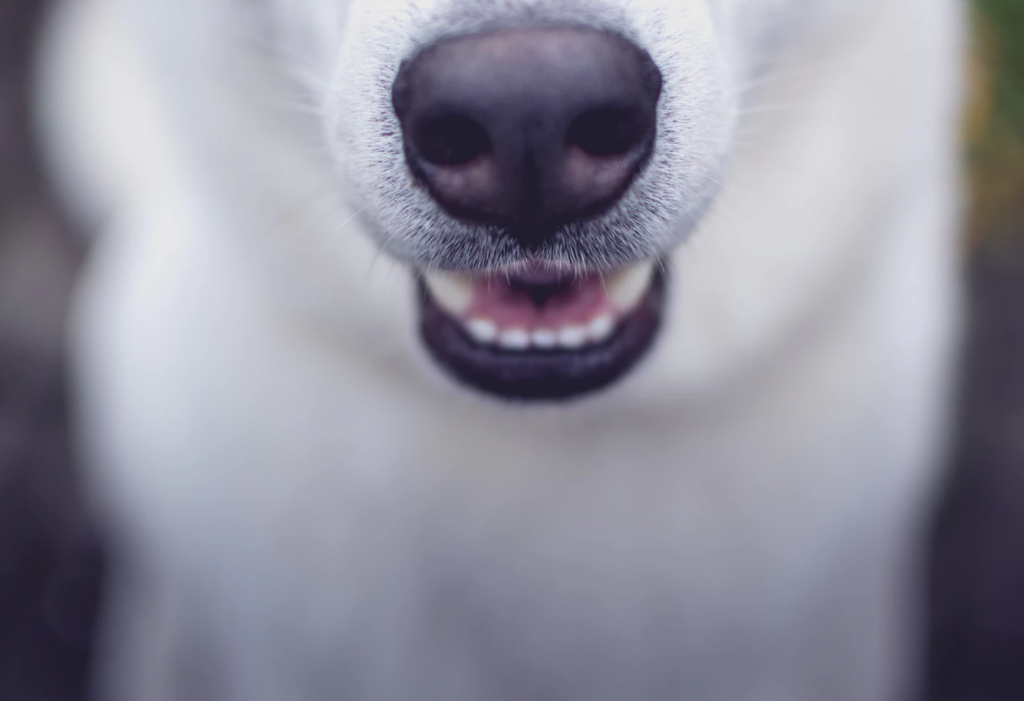 close up of dog mouth