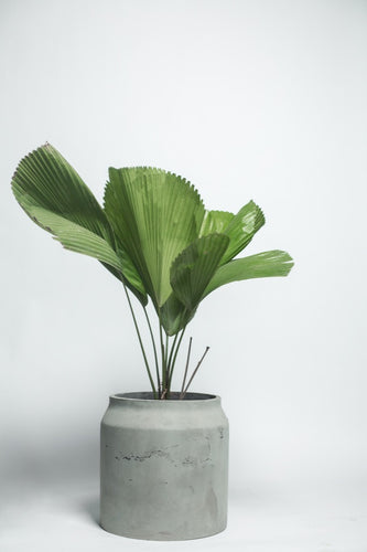 Maison Planter - small - thecrio